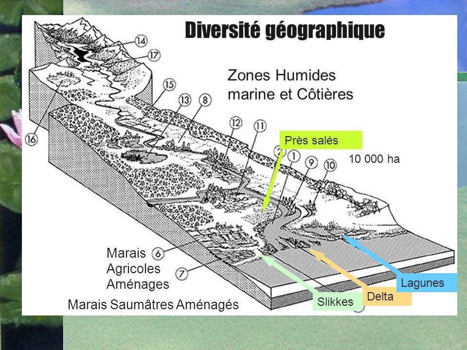 Bullet Point Slide Diversité géographique Delta Slikkes Lagunes Marais Agricoles Aménages Zones Humides marine et Côtières Près salés 10 000 ha Marais
