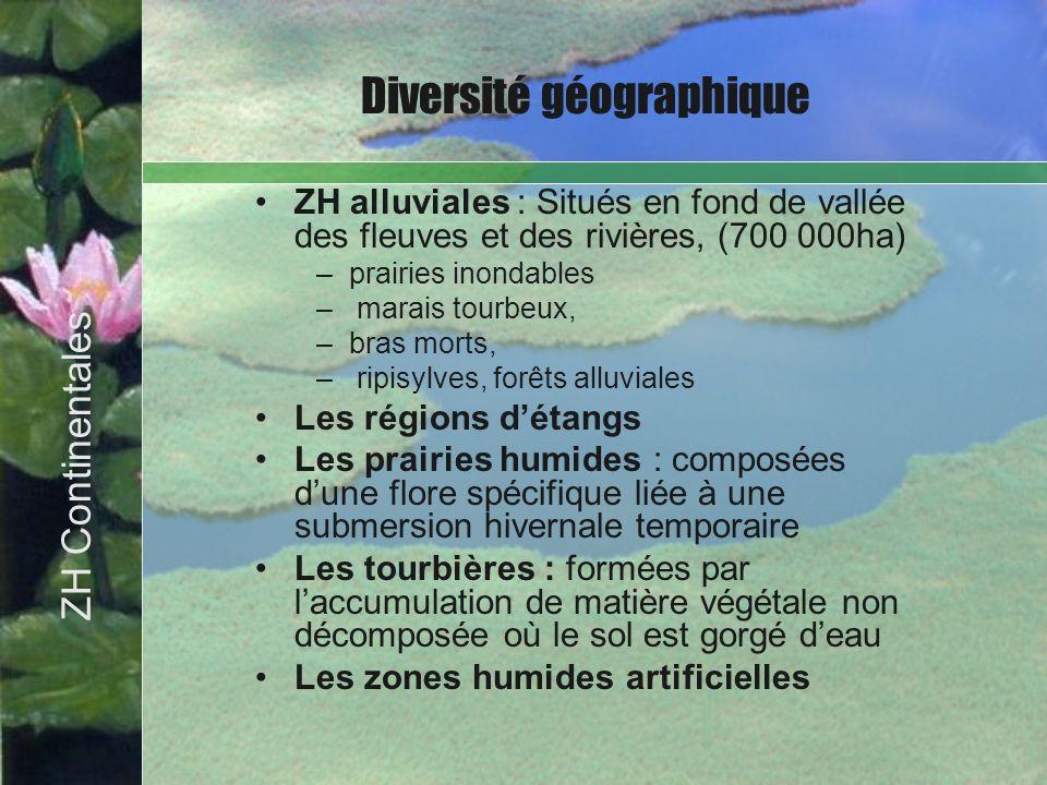 ZH alluviales : Situés en fond de vallée des fleuves et des rivières, (700 000ha) –prairies inondables – marais tourbeux, –bras morts, – ripisylves, f