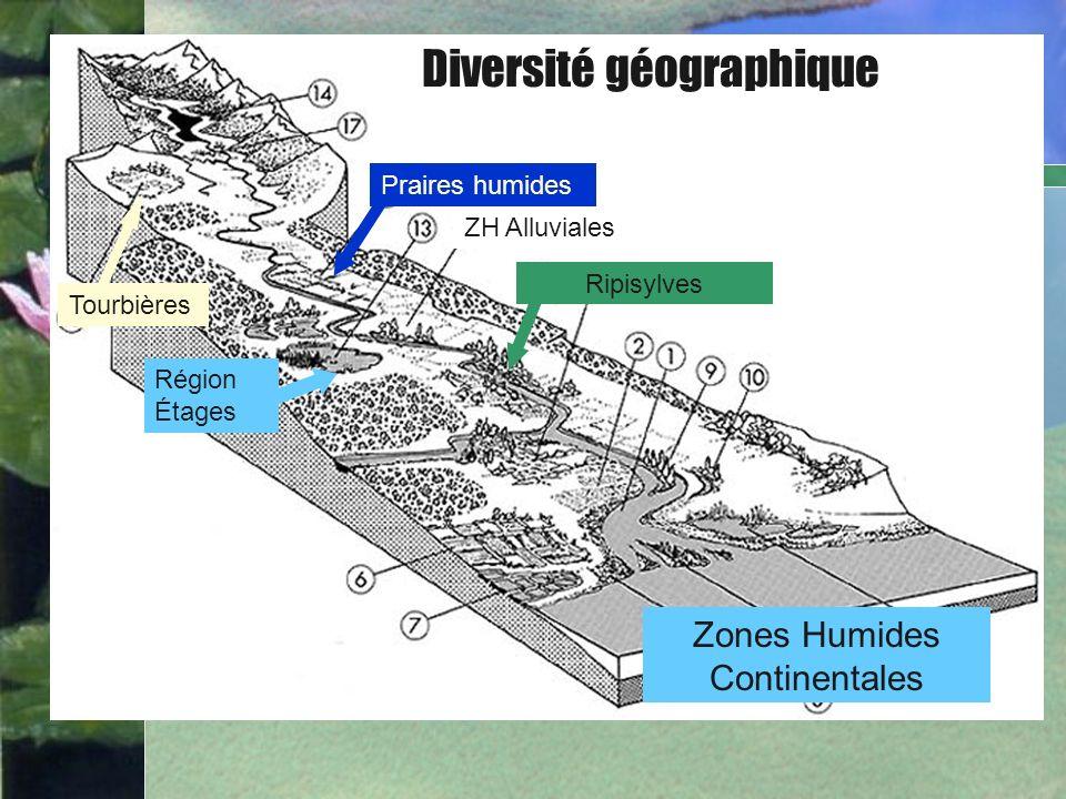 Formation des tourbières 2 000 à 5 000 ans