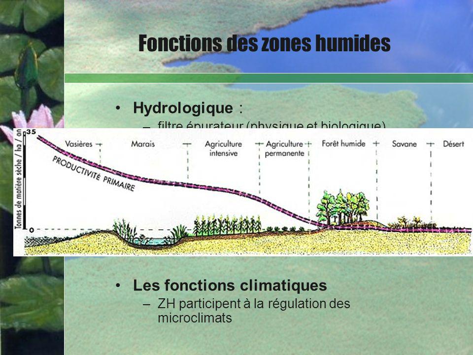 Hydrologique : –filtre épurateur (physique et biologique) – régulation des régimes hydrologiques Les fonctions biologiques –un réservoir de biodiversi
