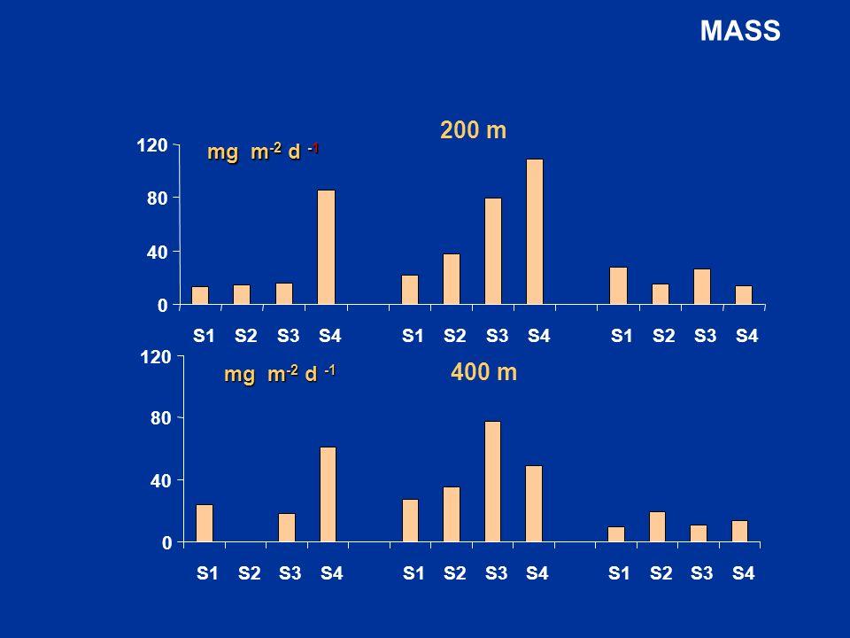 0 40 80 120 S1S2S3S4S1S2S3S4S1S2S3S4 200 m mg m -2 d -1 0 40 80 120 S1S2S3S4S1S2S3S4S1S2S3S4 400 m mg m -2 d -1 MASS