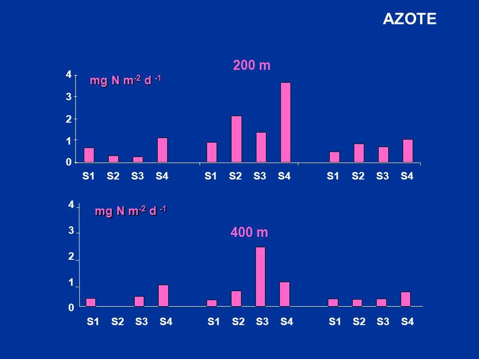 0 S1S2S3S4S1S2S3S4S1S2S3S4 200 m 1 2 3 4 mg N m -2 d -1 S1S2S3S4S1S2S3S4S1S2S3S4 0 1 2 3 4 400 m mg N m -2 d -1 AZOTE