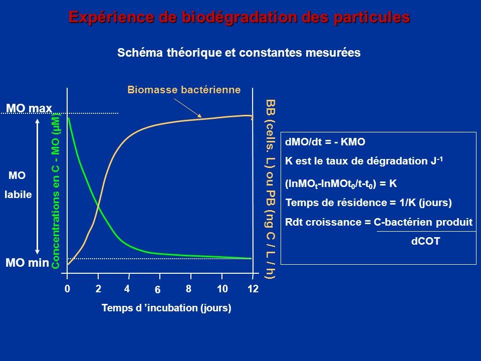 Expérience de biodégradation des particules Expérience de biodégradation des particules Schéma théorique et constantes mesurées Biomasse bactérienne 0