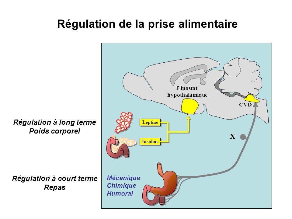 Insuline Leptine Mécanique Chimique Humoral Lipostat hypothalamique CVD X Régulation à court terme Repas Régulation à long terme Poids corporel Régula