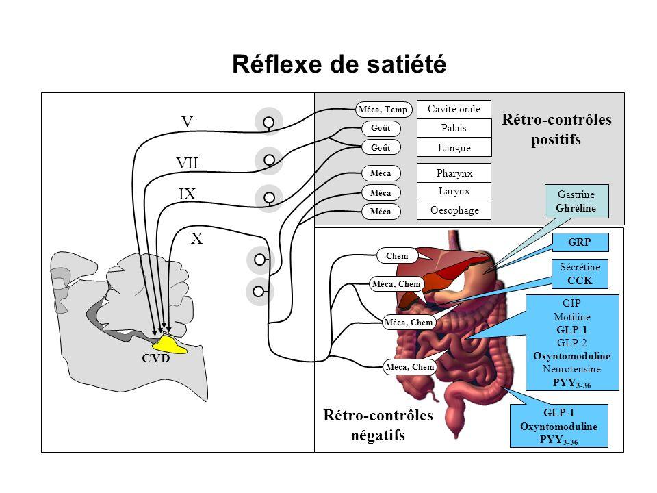 Réflexe de satiété CVD Cavité orale Langue Pharynx V VII IX X Palais Gastrine Ghréline Sécrétine CCK GLP-1 Oxyntomoduline PYY 3-36 GIP Motiline GLP-1