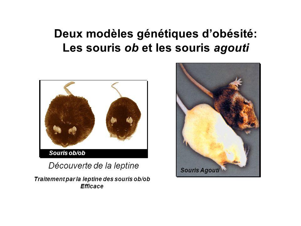 Souris ob/ob Souris Agouti Découverte de la leptine Deux modèles génétiques dobésité: Les souris ob et les souris agouti Traitement par la leptine des