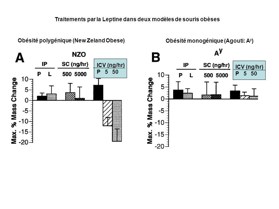 ICV (ng/hr) P 5 50 ICV (ng/hr) P 5 50 Obésité polygénique (New Zeland Obese) Obésité monogénique (Agouti: A y ) Traitements par la Leptine dans deux m