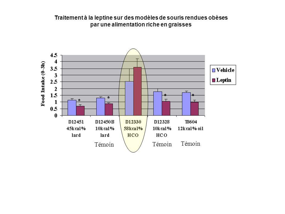 Traitement à la leptine sur des modèles de souris rendues obèses par une alimentation riche en graisses Témoin