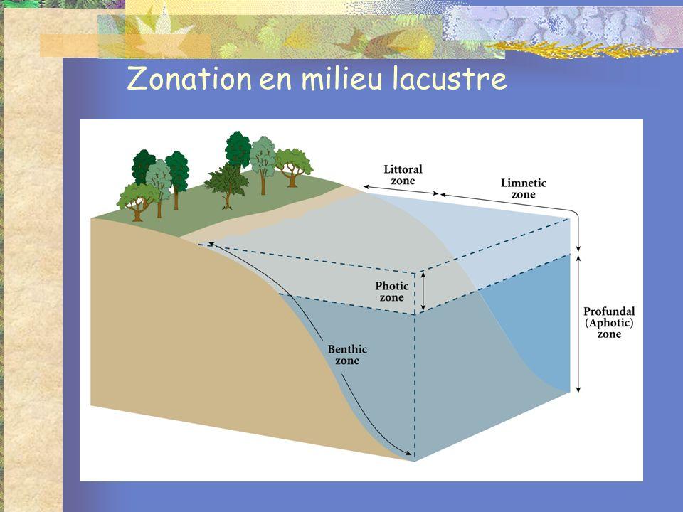 Zonation en milieu lacustre