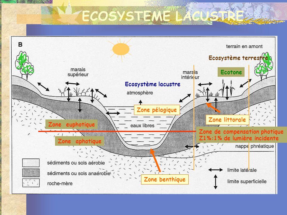 ECOSYSTEME LACUSTRE Ecosystème lacustre Ecosystème terrestre Ecotone Zone littorale Zone pélagique Zone benthique Zone euphotique Zone aphotique Zone de compensation photique Z1%:1% de lumière incidente