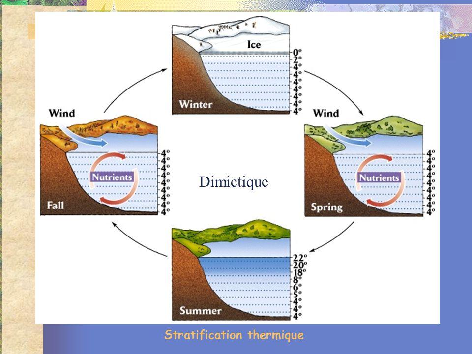 Stratification thermique Dimictique