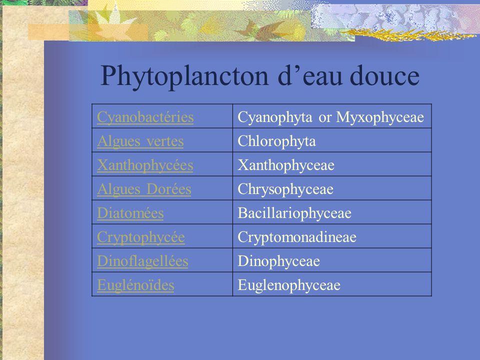 Phytoplancton deau douce CyanobactériesCyanophyta or Myxophyceae Algues vertesChlorophyta XanthophycéesXanthophyceae Algues DoréesChrysophyceae DiatoméesBacillariophyceae CryptophycéeCryptomonadineae DinoflagelléesDinophyceae EuglénoïdesEuglenophyceae