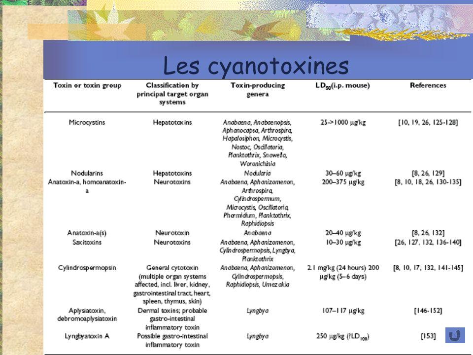 Les cyanotoxines
