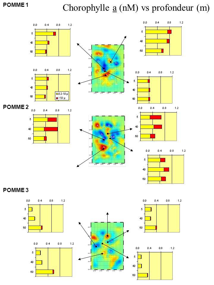 POMME 1 POMME 2 POMME 3 Chorophylle a (nM) vs profondeur (m)