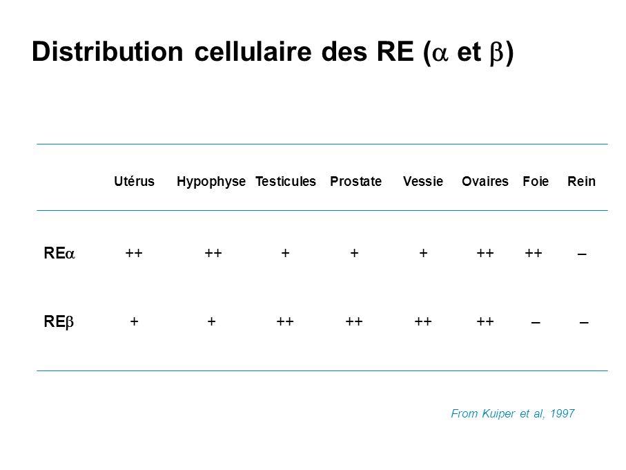 Récepteurs d hormone ERESite AP1 RE RE RE RE E2++++++– DES++++++– Tam – –++++ ICI – –+++ Ral – –+++ d a près K.