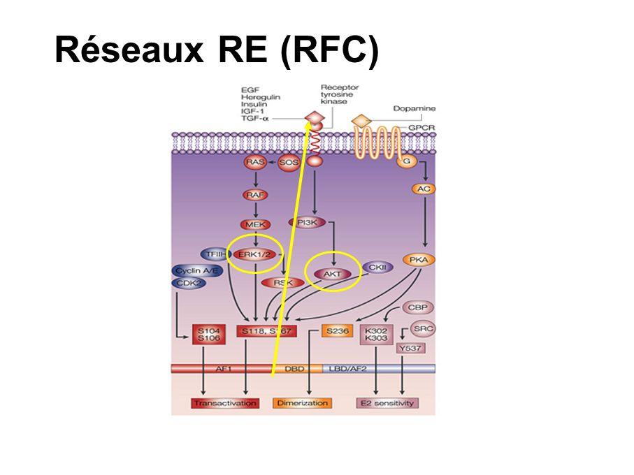 Synthèse EGFR et HER-2 sont impliqués dans la résistance tumorale MAPK phosphorylée est augmentée dans les modèles résistants Des anticorps dirigés contre EGFR, HER-2 et des inhibiteurs de erk1/2 (PD 098059) sont efficaces dans des modèles hormono-résistants