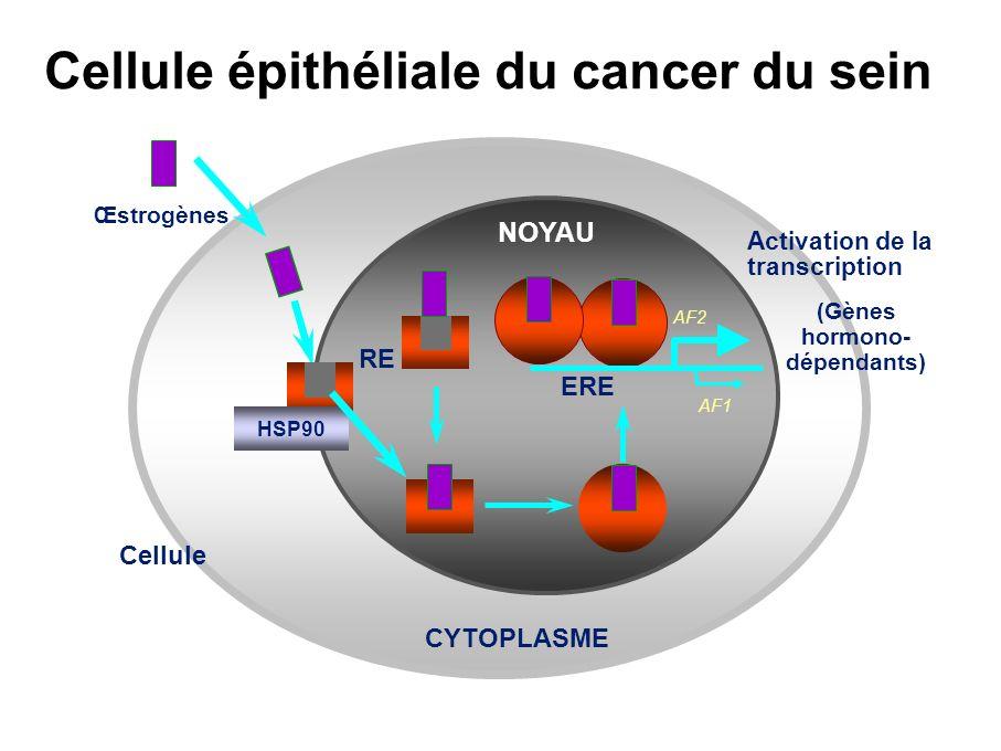 E2 + + Tamoxifène + – Antiœstrogènes purs – – AF1AF2 Transactivation du ER