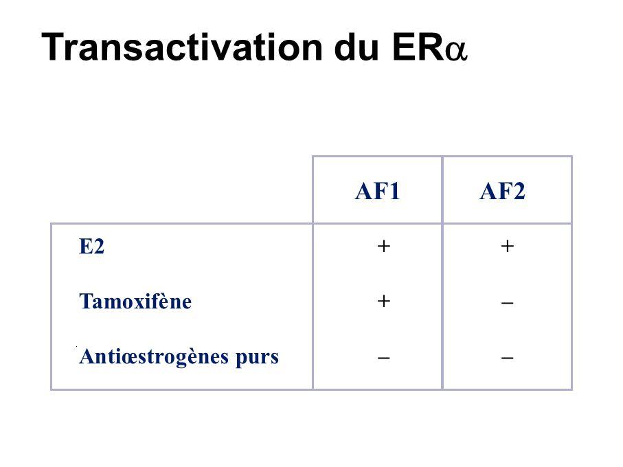Site d activation de la transcription (1) [classique] Estrogen Responsive Element (ERE) E2 RE Activation des gènes Transcription ER E ADN
