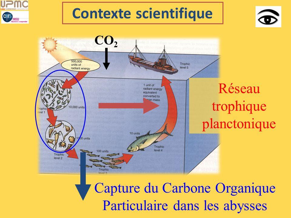 Contexte scientifique CO 2 Capture du Carbone Organique Particulaire dans les abysses Réseau trophique planctonique
