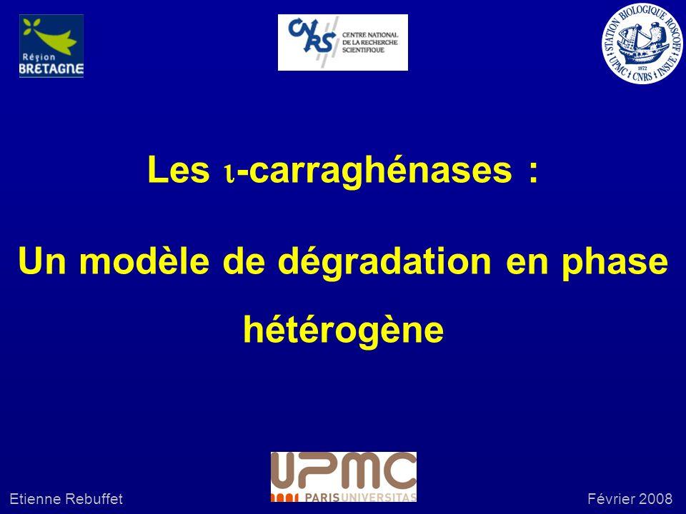 Les -carraghénases : Un modèle de dégradation en phase hétérogène Etienne RebuffetFévrier 2008