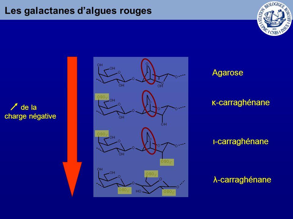 Applications des carraghénanes Médecine Anti-coagulant Anti-viral Cosmétique Agriculture Agroalimentaire GélifiantEmulsifiant Stimulent les défenses des plantes Dentifrice