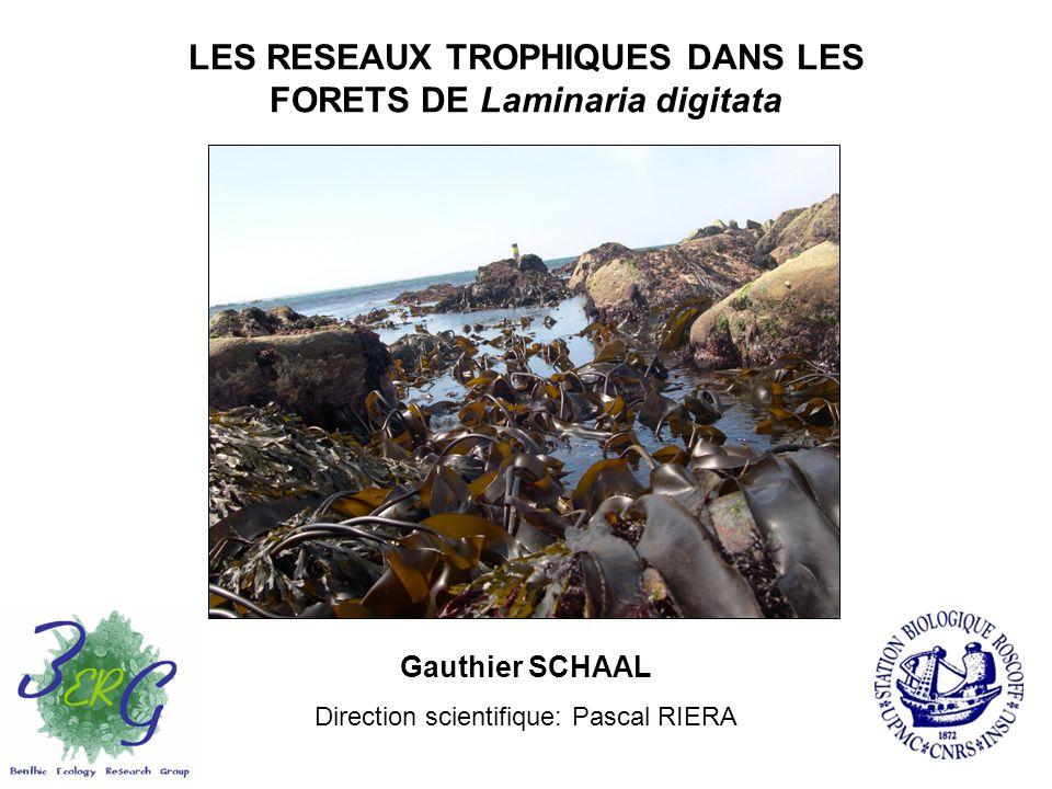 LES RESEAUX TROPHIQUES DANS LES FORETS DE Laminaria digitata Gauthier SCHAAL Direction scientifique: Pascal RIERA