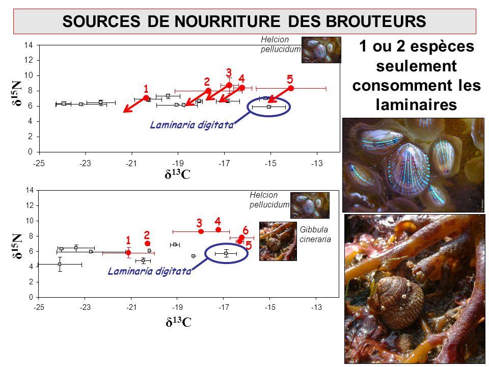 Laminaria digitata δ 13 C δ 15 N Laminaria digitata 3 1 2 4 5 1 2 3 4 5 6 SOURCES DE NOURRITURE DES BROUTEURS 1 ou 2 espèces seulement consomment les
