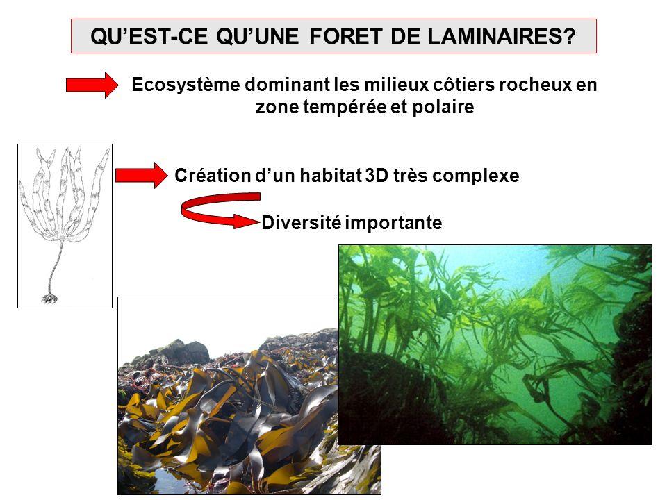 QUEST-CE QUUNE FORET DE LAMINAIRES? Ecosystème dominant les milieux côtiers rocheux en zone tempérée et polaire Création dun habitat 3D très complexe