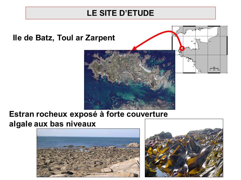 LE SITE DETUDE Ile de Batz, Toul ar Zarpent Estran rocheux exposé à forte couverture algale aux bas niveaux