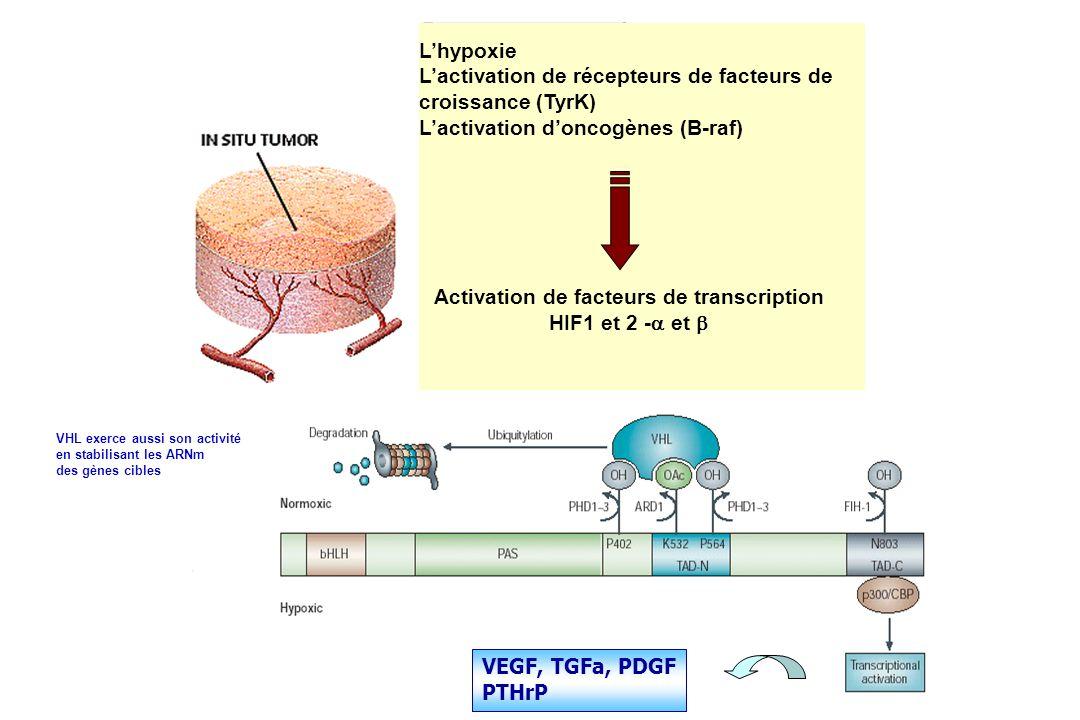 Lhypoxie Lactivation de récepteurs de facteurs de croissance (TyrK) Lactivation doncogènes (B-raf) Activation de facteurs de transcription HIF1 et 2 -