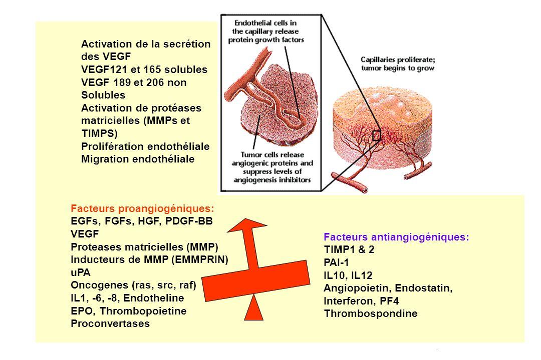 Activation de la secrétion des VEGF VEGF121 et 165 solubles VEGF 189 et 206 non Solubles Activation de protéases matricielles (MMPs et TIMPS) Prolifér