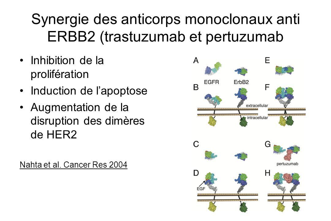 Synergie des anticorps monoclonaux anti ERBB2 (trastuzumab et pertuzumab Inhibition de la prolifération Induction de lapoptose Augmentation de la disr