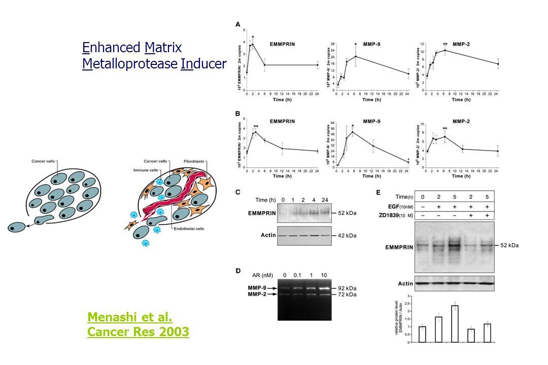 Menashi et al. Cancer Res 2003 Enhanced Matrix Metalloprotease Inducer
