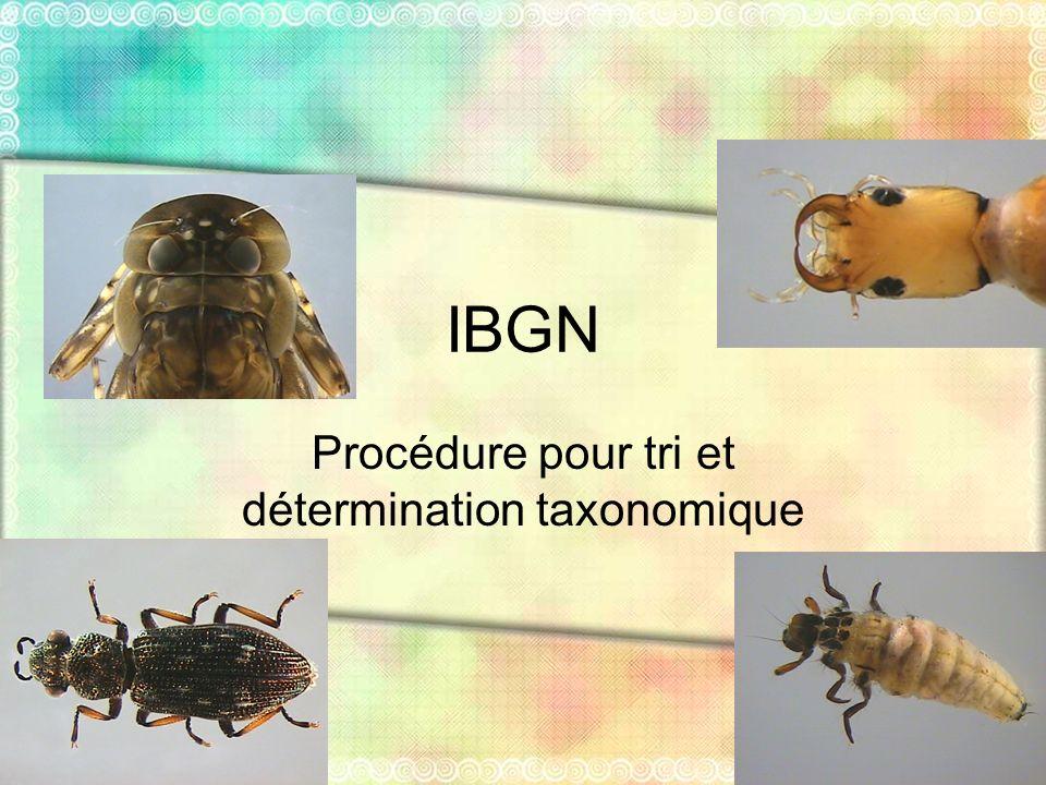 IBGN Procédure pour tri et détermination taxonomique