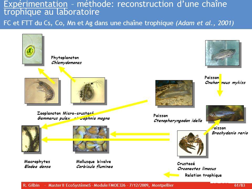 R. Gilbin - Master II EcoSystèmeS - Module FMOE326 – 7/12/2009, Montpellier 61/83 Expérimentation – méthode: reconstruction dune chaîne trophique au l
