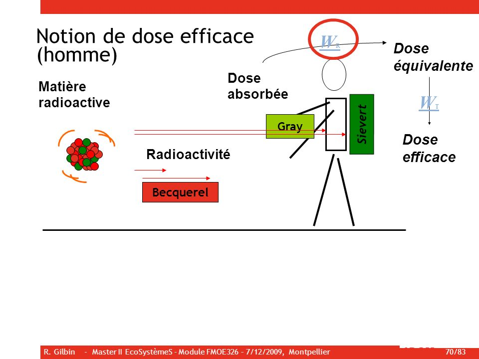 R. Gilbin - Master II EcoSystèmeS - Module FMOE326 – 7/12/2009, Montpellier 70/83 Becquerel Gray Sievert Matière radioactive Radioactivité WTWT Dose é