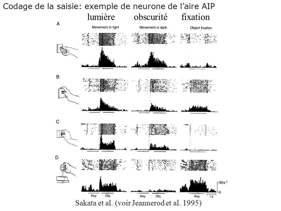 Rizzolatti et al. (voir Jeannerod et al. 1995) Codage de la saisie: Exemple de neurone du prémoteur ventral