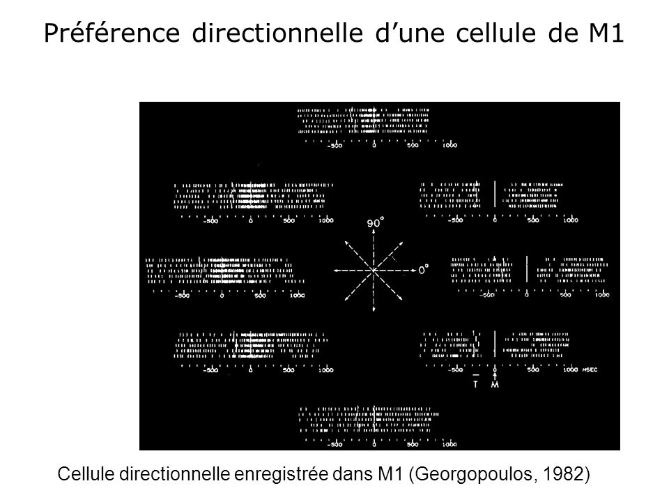 Codage de la direction du mouvement: Exemple de neurone du prémoteur dorsal