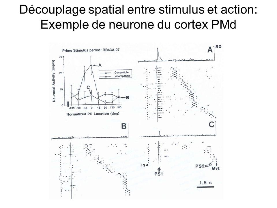 Découplage spatial entre stimulus et action -1