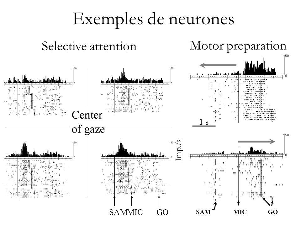 Different stimuli, une même action Traitement sensoriel vs. moteur