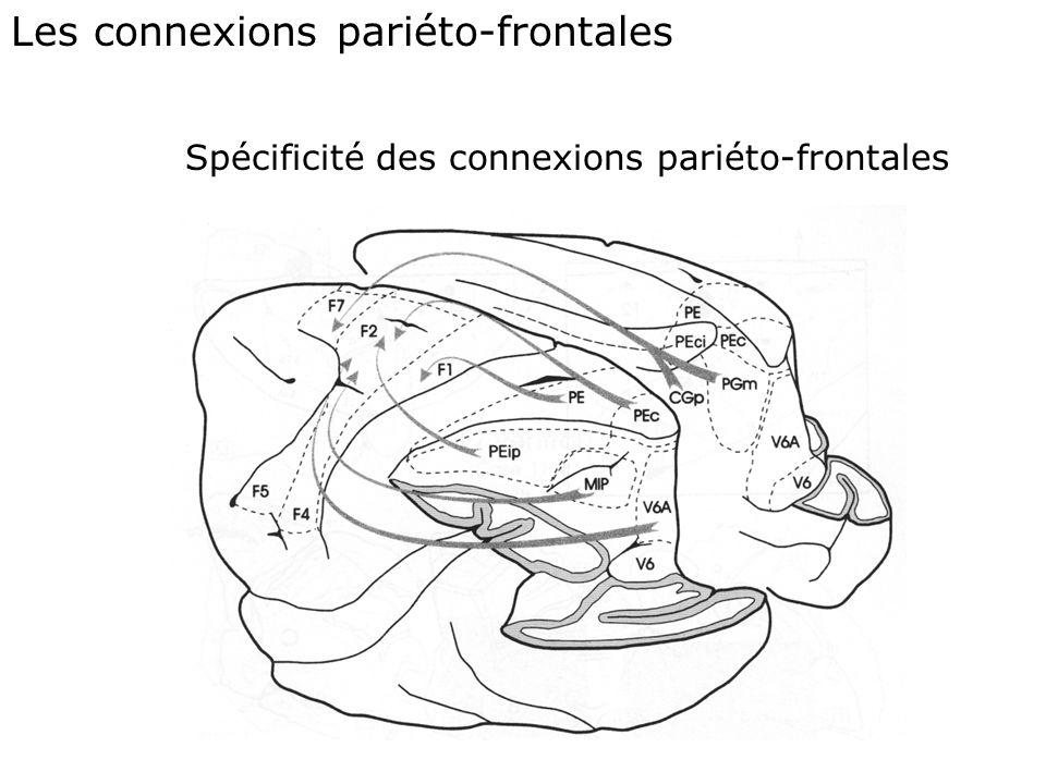 Le cortex pariétal et le cortex frontal Des régions anatomiquement et fonctionnellement hétérogènes. La caractérisation des aires repose essentielleme
