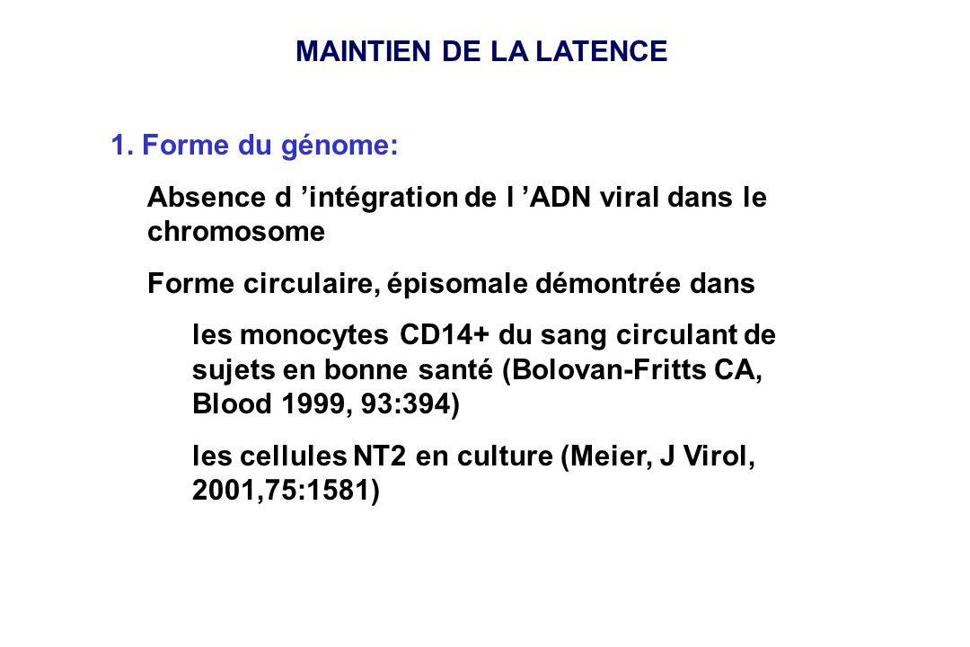 MAINTIEN DE LA LATENCE 1. Forme du génome: Absence d intégration de l ADN viral dans le chromosome Forme circulaire, épisomale démontrée dans les mono