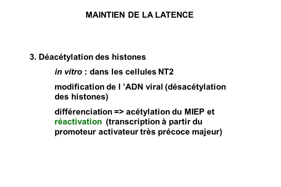 MAINTIEN DE LA LATENCE 3. Déacétylation des histones in vitro : dans les cellules NT2 modification de l ADN viral (désacétylation des histones) différ