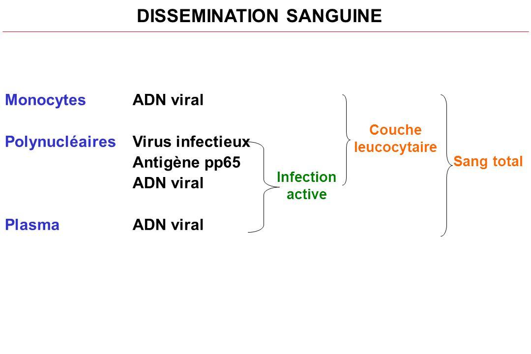 Monocytes ADN viral Polynucléaires Virus infectieux Antigène pp65 ADN viral PlasmaADN viral DISSEMINATION SANGUINE Infection active Couche leucocytair