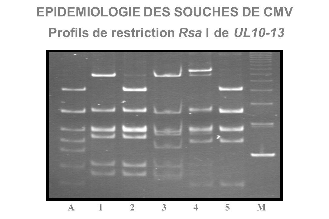 EPIDEMIOLOGIE DES SOUCHES DE CMV Profils de restriction Rsa I de UL10-13 A 1 2 3 4 5 M