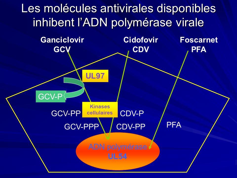 Les molécules antivirales disponibles inhibent lADN polymérase virale ADN polymérase UL54 UL97 GCV-PPPCDV-PP PFA Foscarnet PFA Ganciclovir GCV Cidofov