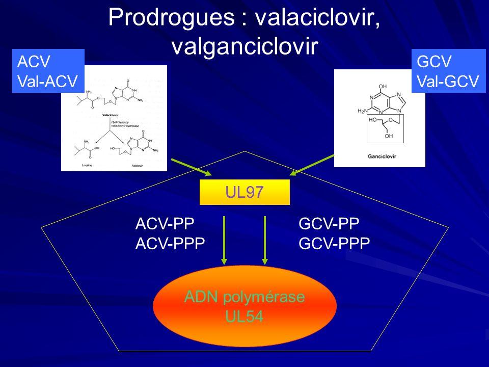 Prodrogues : valaciclovir, valganciclovir ADN polymérase UL54 UL97 ACV-PP ACV-PPP GCV-PP GCV-PPP GCV Val-GCV ACV Val-ACV