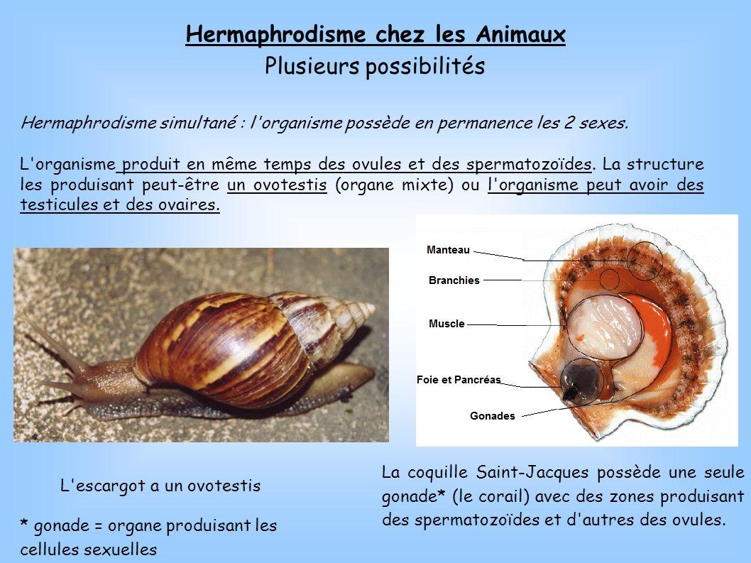 Hermaphrodisme chez les Animaux Plusieurs possibilités Hermaphrodisme simultané : l'organisme possède en permanence les 2 sexes. L'organisme produit e