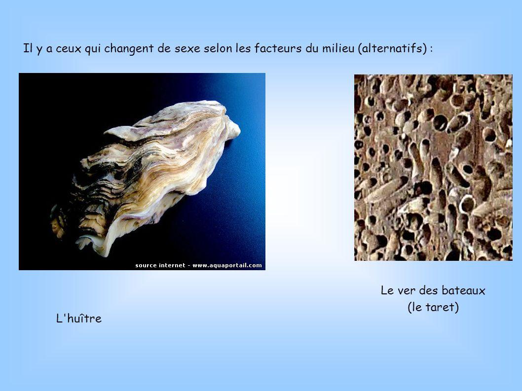 Il y a ceux qui changent de sexe selon les facteurs du milieu (alternatifs) : L'huître Le ver des bateaux (le taret)