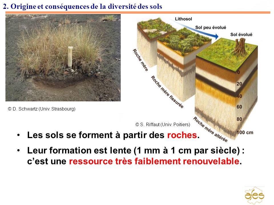 2. Origine et conséquences de la diversité des sols Les sols se forment à partir des roches. Leur formation est lente (1 mm à 1 cm par siècle) : cest